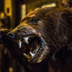 The Drovers Inn Bear